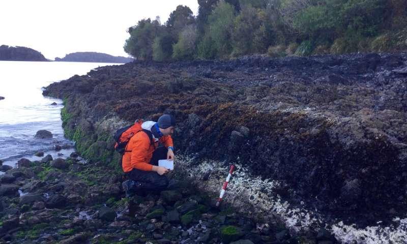 2016年智利地震中白线藻类死亡标志着隆起.jpg