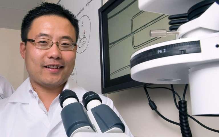 研究报告称新的免疫治疗技术可以专门针对肿瘤细胞.jpg