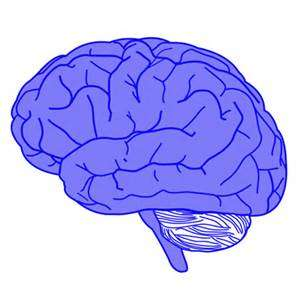 自闭症幼儿的大脑对语言的反应与基因表达的改变有关.jpg