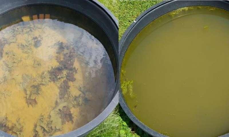 盐生长的浮游动物生长太慢 不能阻止盐诱导的藻类繁殖.jpg