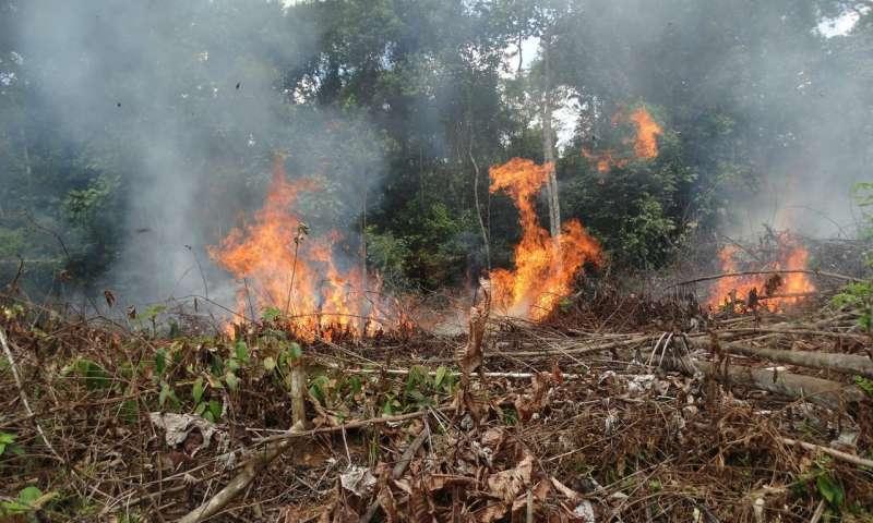 2016年和平协定后 哥伦比亚热带森林火灾飙升.jpg