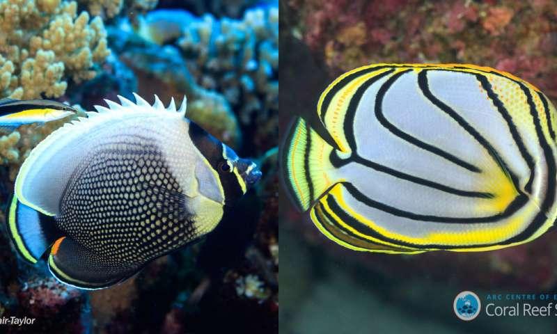解决了礁鱼颜色模式的神秘面纱.jpg