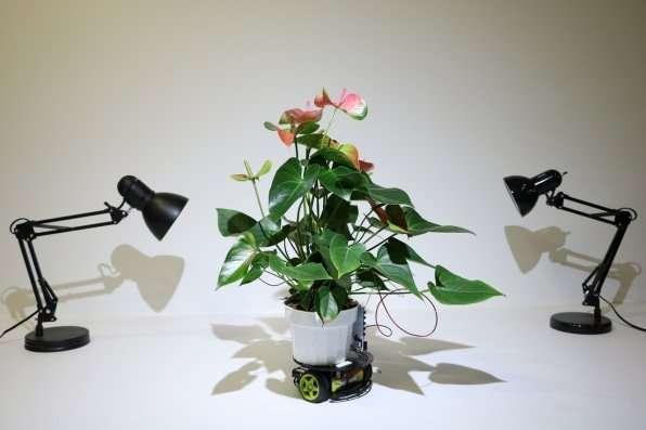 植物机器人能够将自己移动到首选光源.jpg