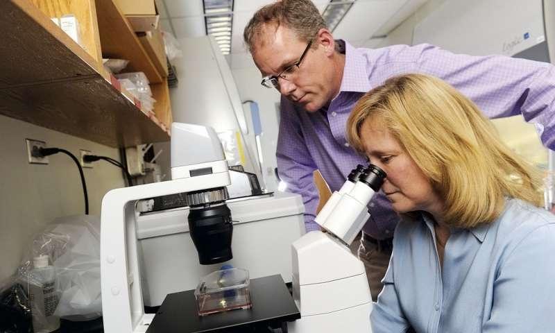 肺中的记忆B细胞对于更有效的流感疫苗接种可能是重要的.jpg