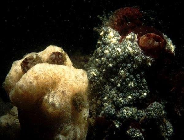 海洋无脊椎动物揭示了人类血液 免疫系统的进化.jpg
