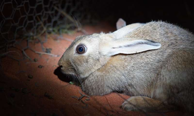 入侵物种和栖息地丧失了我们最大的生物多样性威胁.jpg