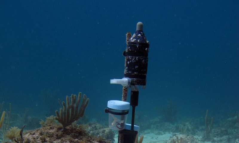 发现珊瑚幼虫更喜欢嘈杂的环境.jpg
