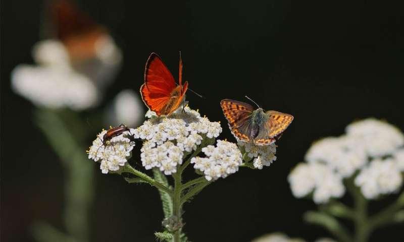 欧洲保护区网络尚未能阻止德国蝴蝶的衰落.jpg
