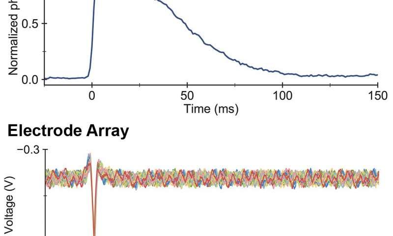 研究人员设计了看到神经细胞着火的技术.jpg