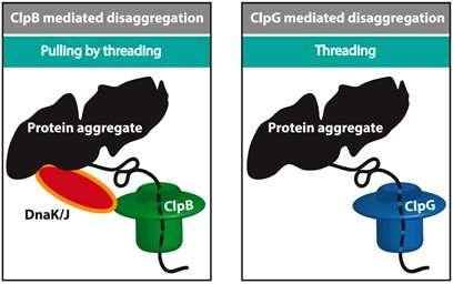 细胞机器如何展开错误折叠的蛋白质.jpg