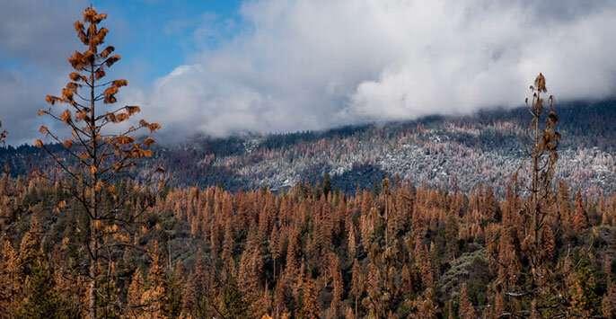 我们的森林可以在下一次大干旱中存活吗.jpg