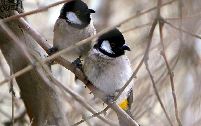 聪明的雄性鸟可以让雌性鸟着迷.jpg