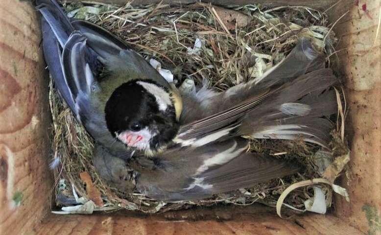 对于这些鸟类而言 气候变化意味着致命冲突的增加.jpg