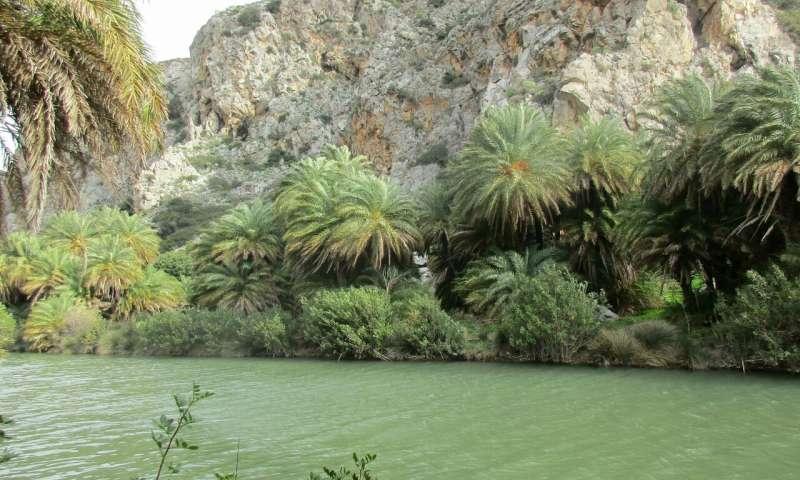 利用基因组数据解开了北非枣椰树的历史.jpg